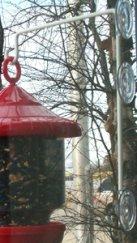 Suction Cup Feeder Window Hanger