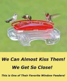 Window Style Hummingbird Feeder