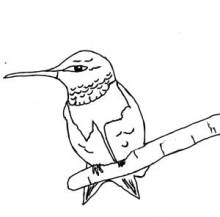 Male Ruby-throated Hummingbird Perching Coloring Page