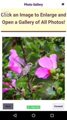 Hummingbird Migration Mobile App Photo Gallery