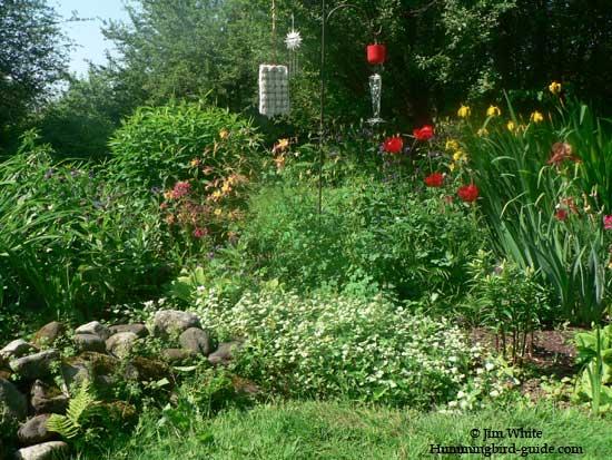 Our Hummingbird Perennial Garden