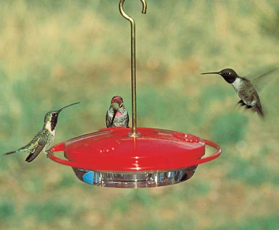 Hummzinger Mini Tray Hummingbird Feeder Easy Cleaning And