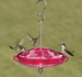 Tray Hummingbird Feeders