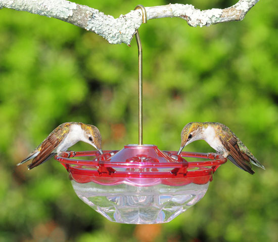 HummBlossom Rose Color Tray Hummingbird Feeder