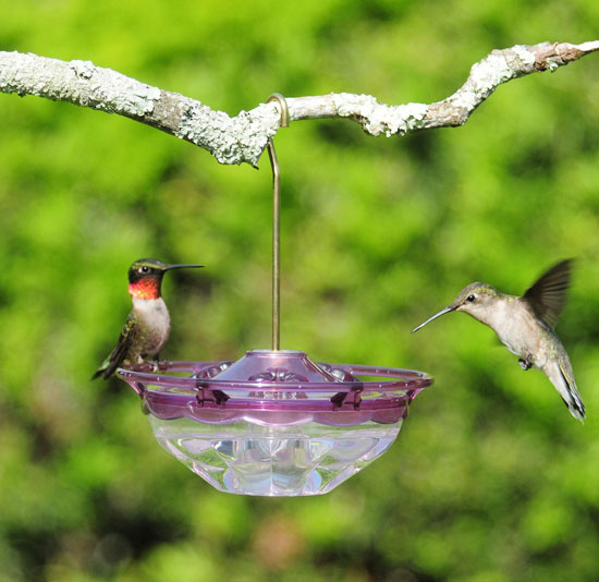 HummBlossom Plum Color Tray Hummingbird Feeder