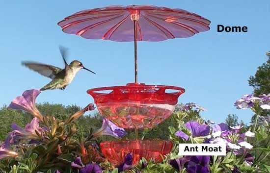 Humm Blossom Accessory Kit with Staked Feeder