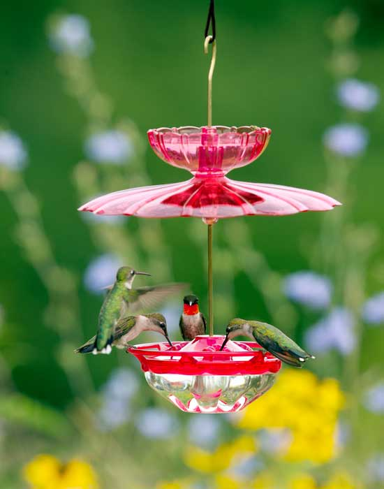 Humm Blossom Accessory Kit with Hanging Feeder