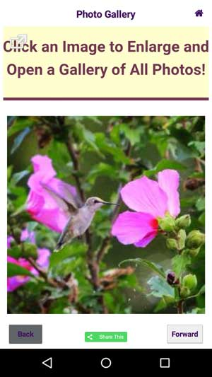 Hummingbird Migration Mobile App Photo Gallery