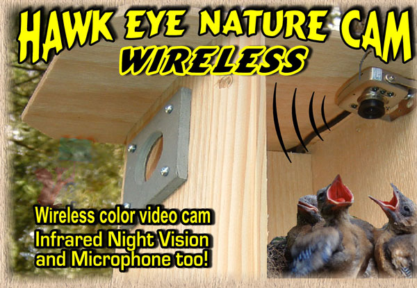 The Hawk Eye Wireless Spy Camera now available in a wireless model! Witness the birth and caring of baby birds live on your TV, PC, Laptop, Tablet or Smartphone!