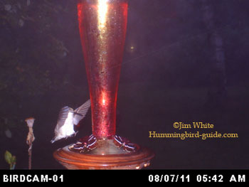 An Early Morning Photo from our BirdCam