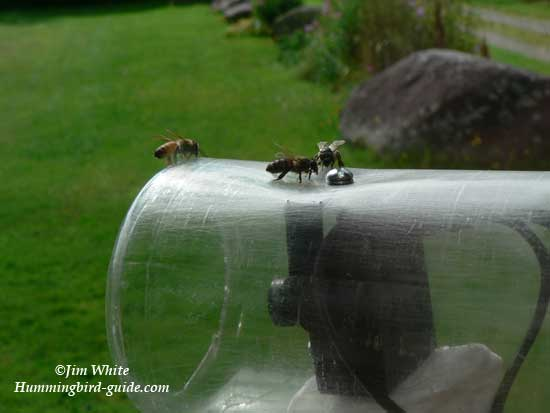 Bees on our BirdCam looking for the feeder.