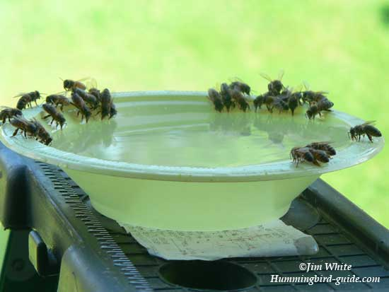 Oneybees on the Bowl with the 2 to 1 Ratio of Nectar