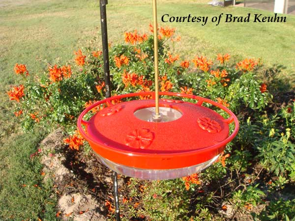 Our HummZinger High View Bee Proof Feeder