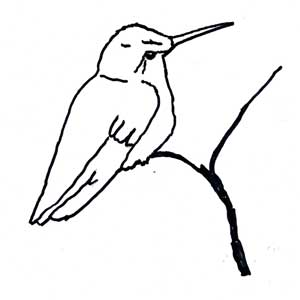 hummingbirds for kids fun facts and activities snowy egret coloring page female ruby throated hummingbird
