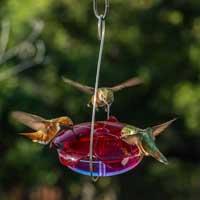 Droll Yankees Lavender Dish Hanging Hummingbird Feeder