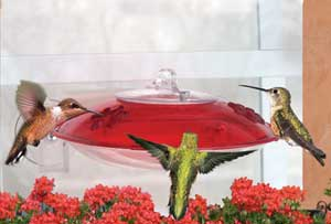 DYWH3 DROLL YANKEE WINDOW HUMMINGBIRD FEEDER