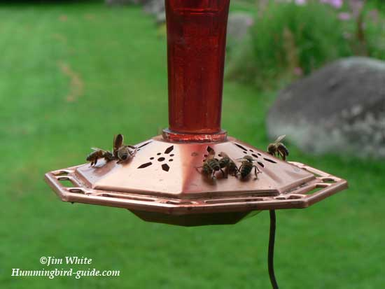 Bees on our Feeder with a 5 to 1 Nectar Ratio