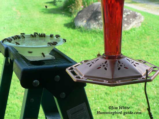Hummingbird Feeder Bees How To Solve The Problem