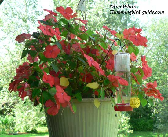 Our hanging flower basket with a planter hummingbird feeder.