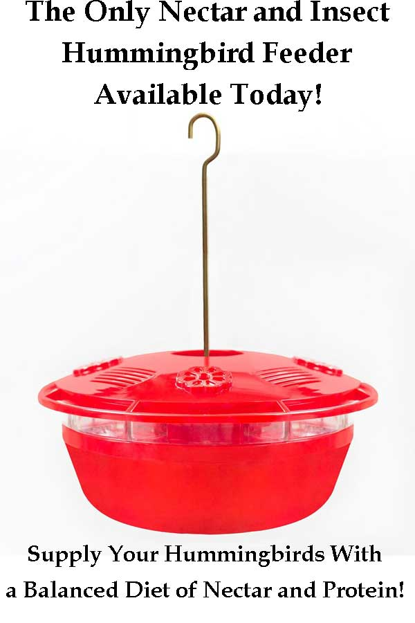 Red Humm-Yumm Nectar and Protein Hummingbird Feeder
