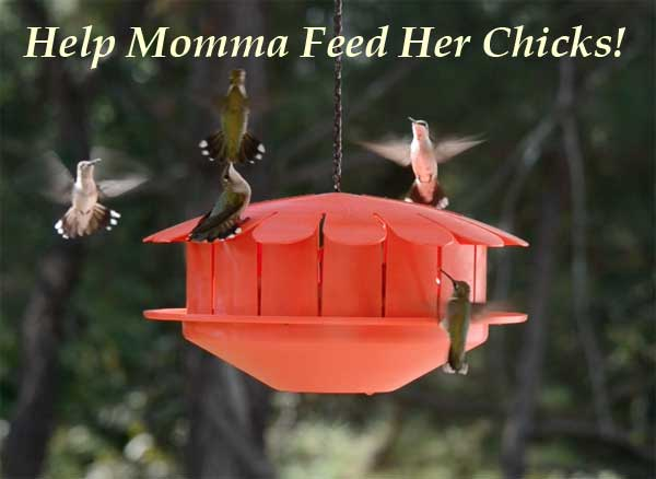 Humm-Bug Hummingbird Insect Feeder