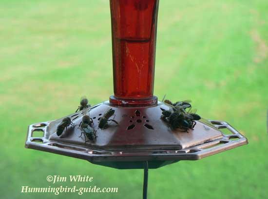 Honeybees on a Hummingbird Feeder