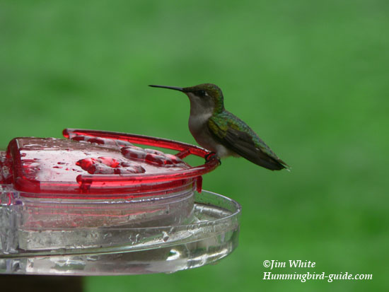Aspects Jewel Box Window Hummingbird Feeder Review See Our