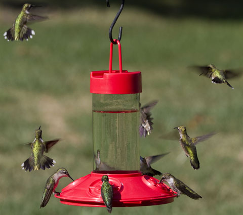 How To Attract Hummingbirds Guaranteed To Attract Lots Of Hummers