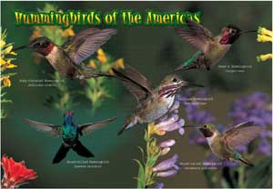 Kids Hummingbirds Puzzle