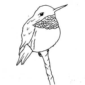 vogeltjesbes | Stämplar | Pinterest | Tegninger, Malebøger ... |Hummingbird Nest Coloring Page