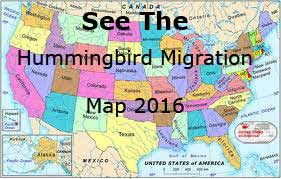 Hummingbird Migration Spring Migration Sightings And Map For - Interactive map of migration in the us