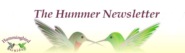 graphic relating to Printable Hummingbird Nectar Recipe identify Hummingbird Admirers Publication. For the Hummingbird Lover.
