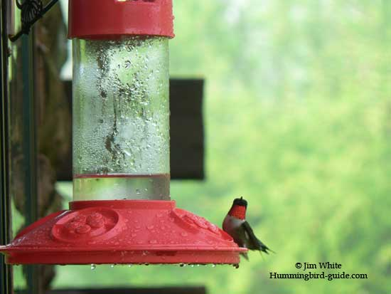 Our Dr.JB's Hummingbird Feeder with Ruby-throated hummingbird