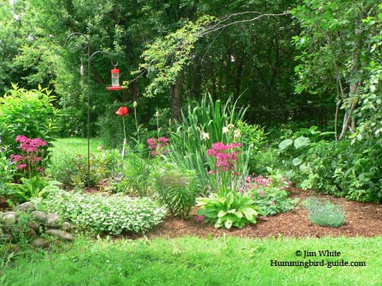 Our Hummingbird Garden Plan