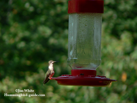 Our back porch feeder with homemade hummingbird nectar.