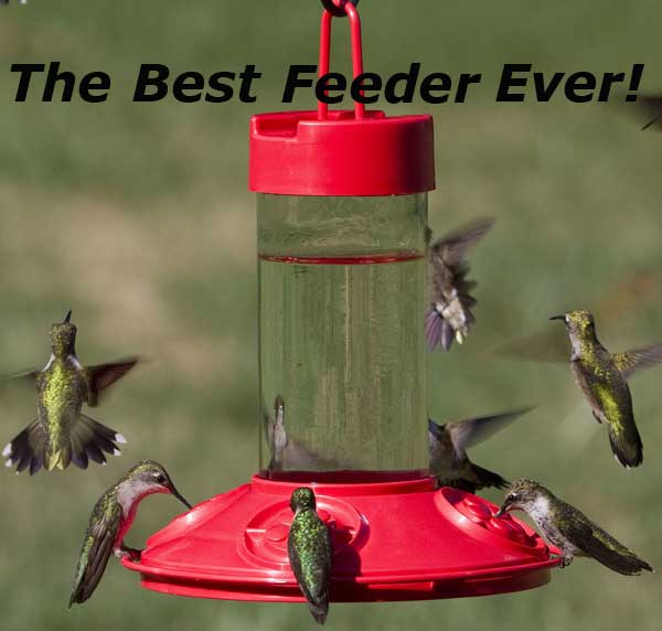 Dr Jbs Red Hummingbird Feeder Said To Be The Best