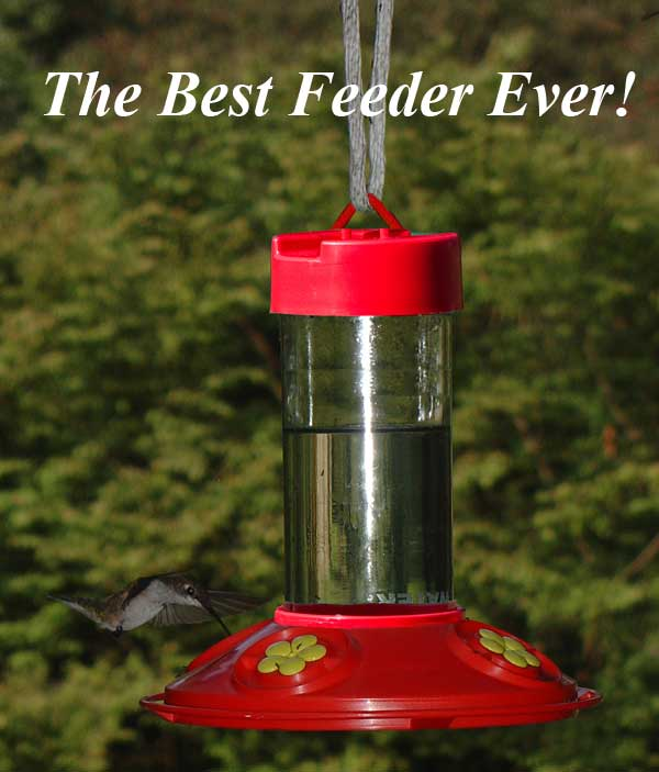 Dr.JB's Red Hummingbird Feeder with Yellow Flowers
