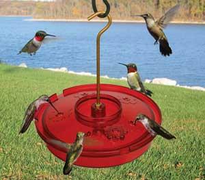 The Hummingbird Haven Tray Feeder