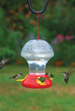 Basic Hummingbird Feeders