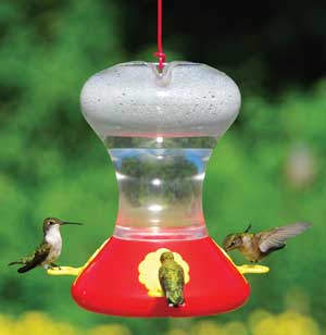 Hummingbird Feeder Without Perches