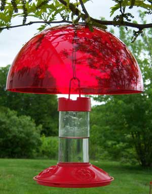 Hummingbird Feeder Helmet