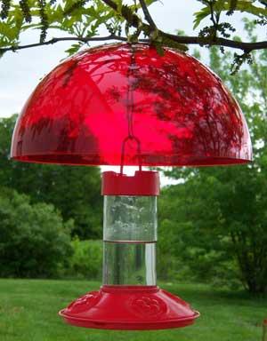 Hummingbird Feeder Helmet