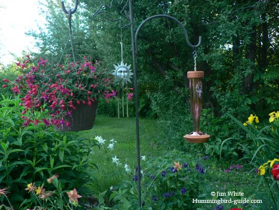 Schrodt Etched Hummingbird Feeder in our Perennial Garden