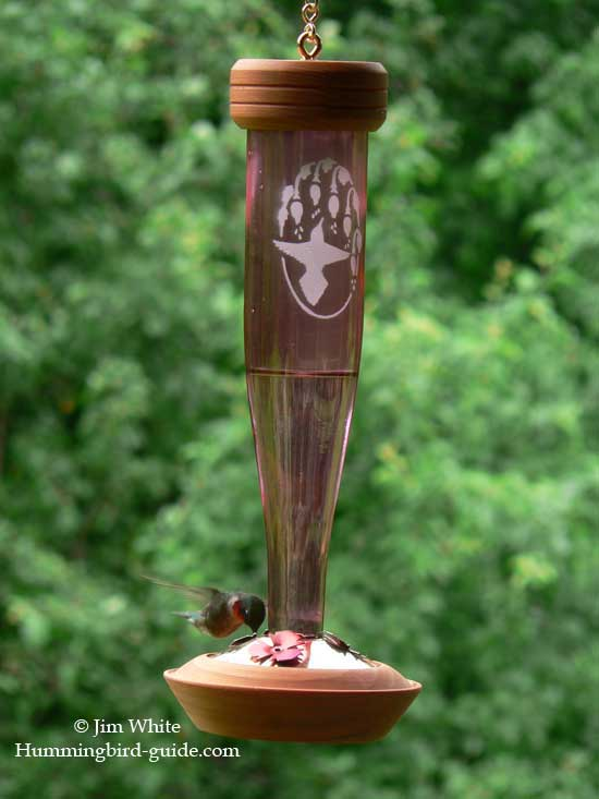 Ruby-throated Hummingbird at Our Schrodt Feeder