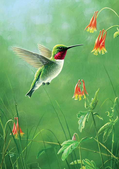 Hummingbird greeting cards the 1 eco friendly cards hummingbird greeting cards tfg12250 tfg12251 tfg12542 m4hsunfo
