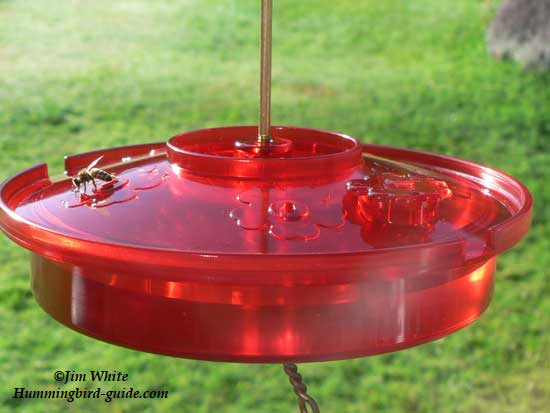 Hummingbird Haven Feeder with bee