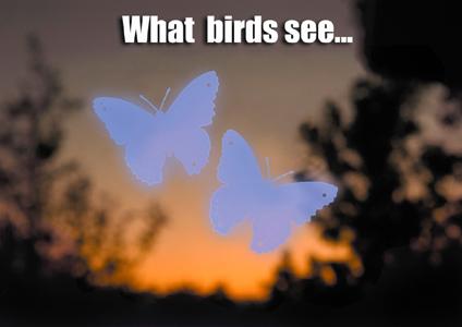 Butterfly Window Decal