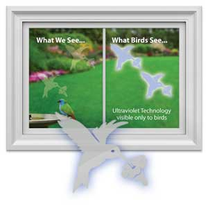 Hummingbirds Window Decal