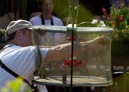 The Capture in a Hummingbird Trap