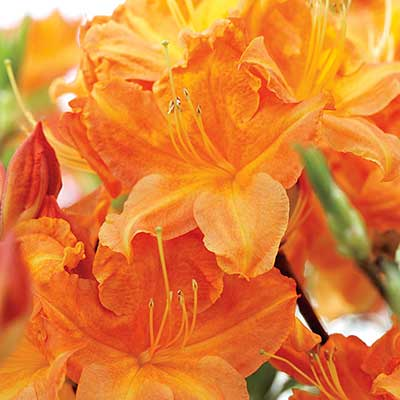 Flowers That Attract Hummingbirds Our Personal